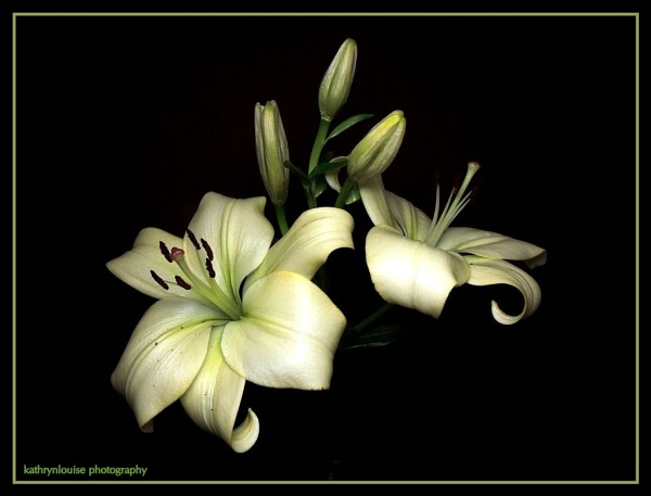 Fading Lily. by kathrynlouise