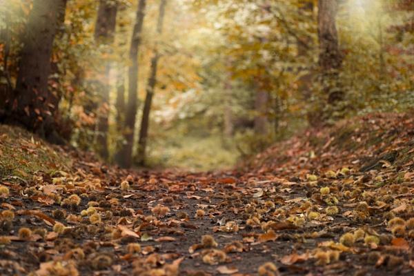 chestnut forest by amanda0102