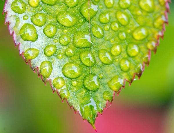 Wet Leaf by Footski