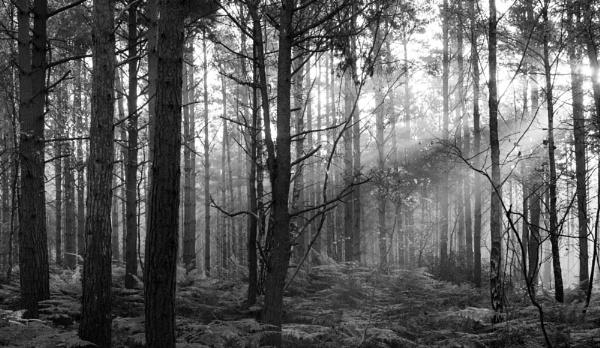The Deep Dark Woods by Putnam
