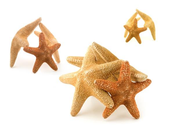 Starfish by victorburnside