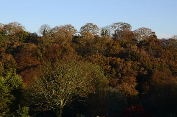 Autumn valley by WILLIAST
