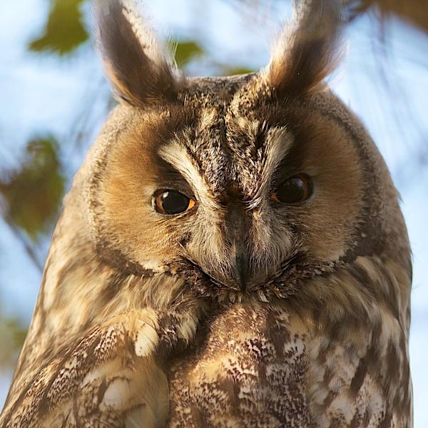 Those eyes.... by BirdmanDon