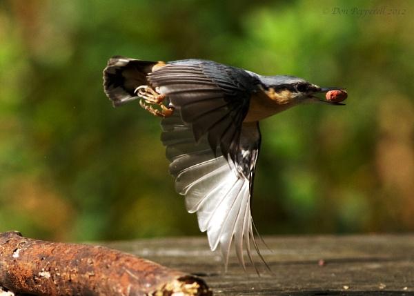 Grab by BirdmanDon