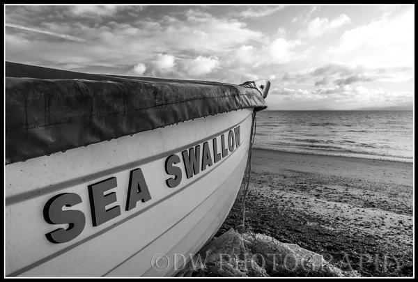 Sea Swallow by Dwaller