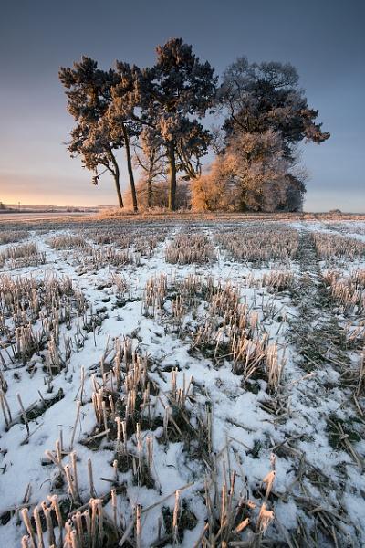 A Winters Dawn by fazzer