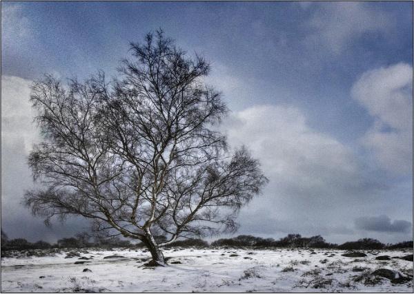 Winter tree by silverbells