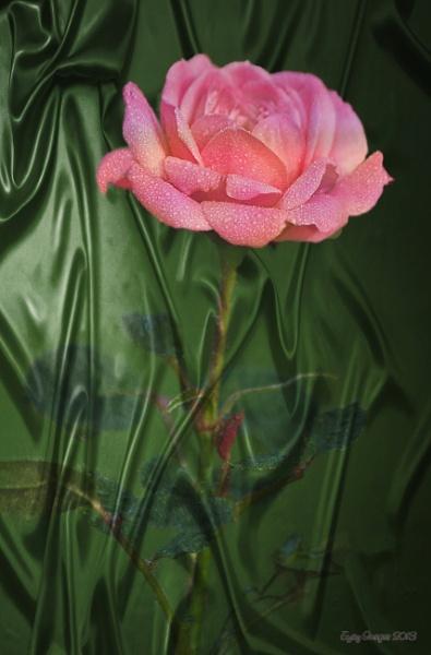 Rose From Silk by Mozzytheboy