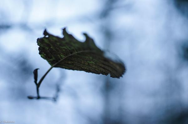 Macro Shot - Green Leaf II by Swarnadip