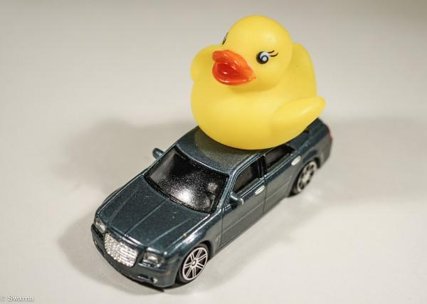 Macro Shot - Duck on Car! by Swarnadip