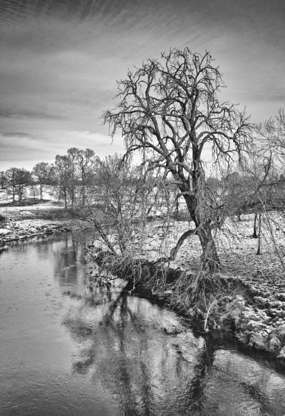 Winter tree, Doune by Rab90