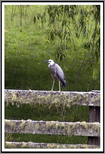 Bird On A Fence by sidestep