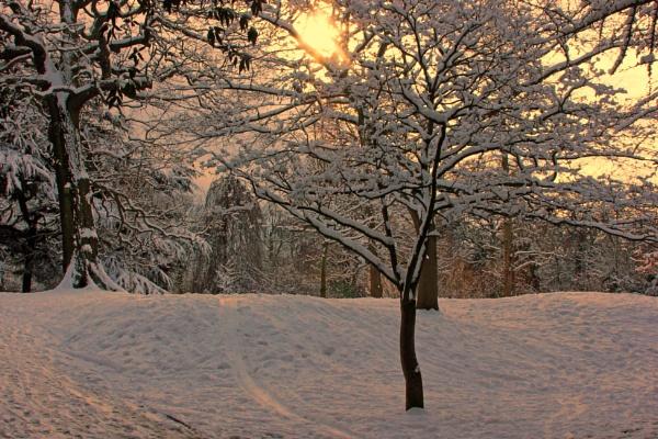 Winter\'s Sun by sastimos
