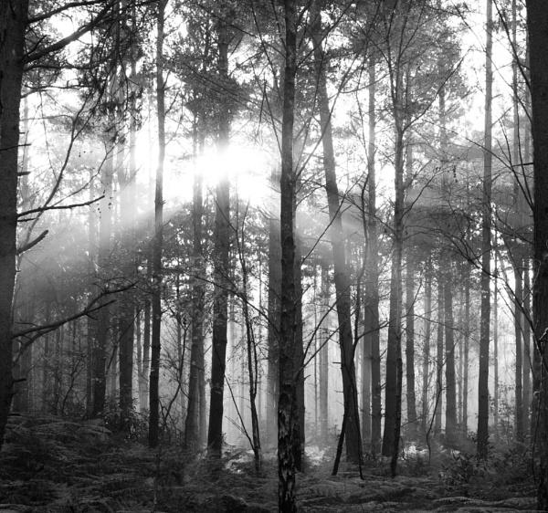 The Deep Dark Woods 2 by Putnam