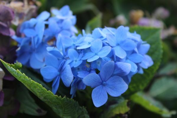Blue Flower by alpha666