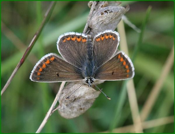 Gloucestershire Butterflies II by Glostopcat