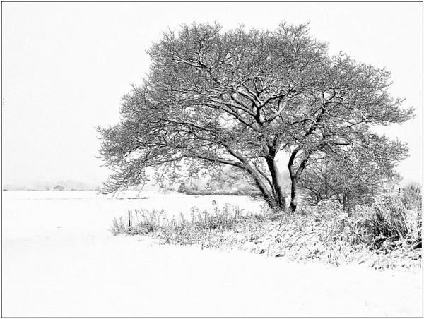 Winter Morn by 49er
