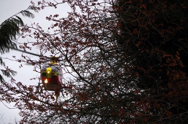 Bird in the Tree by johnwnjr