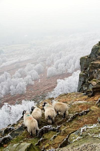 Frosty Morn by RoyChilds
