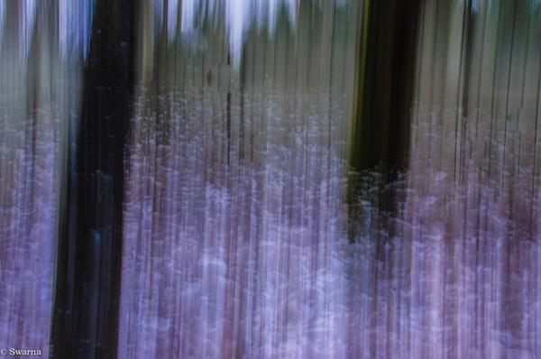 Abstract - Trees II by Swarnadip
