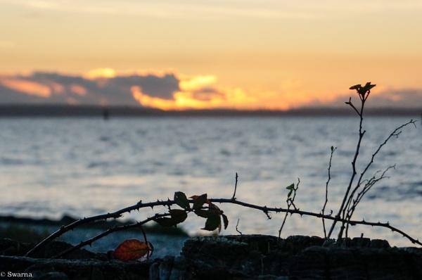 Sunset at Cresent Beach, BC by Swarnadip