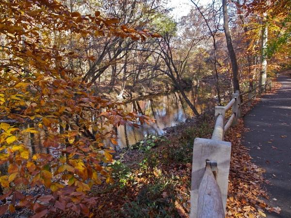 Autumn Colors on Pennypack Creek by handlerstudio