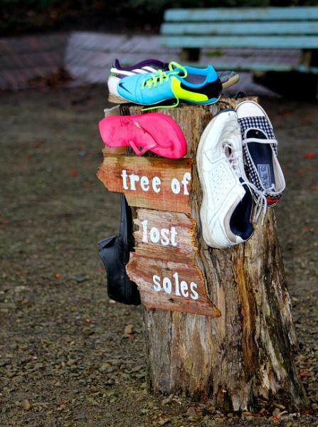 Tree of lost soles by Lelah
