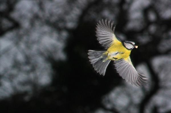 Food flight by turniptowers