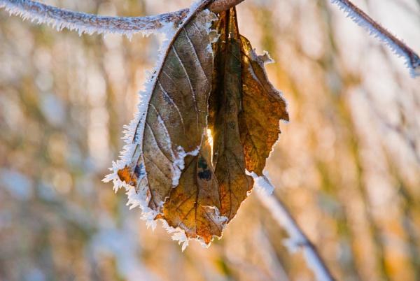 Last leaf by davereet