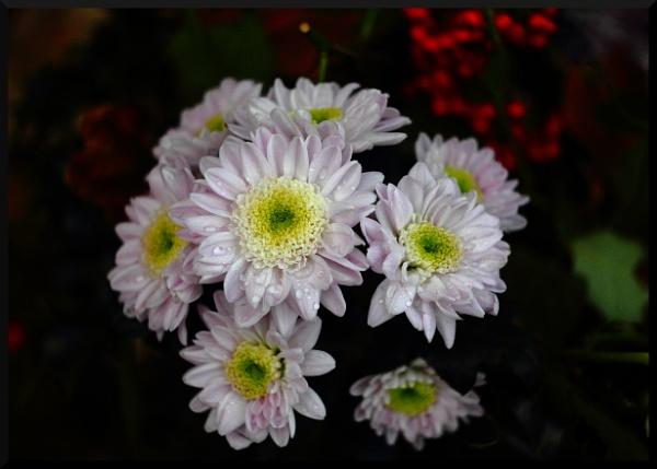 Flowers through Helios by BillyBunter