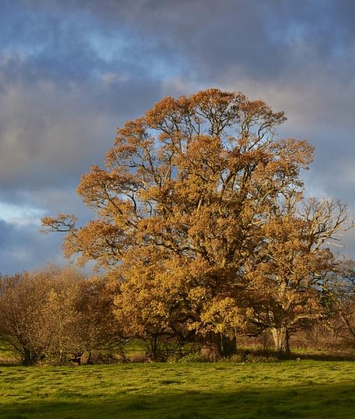 Autumn colour by Meditator