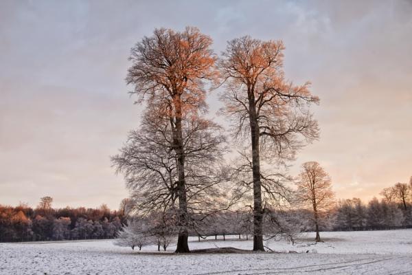 Ashridge Winter by hammermad
