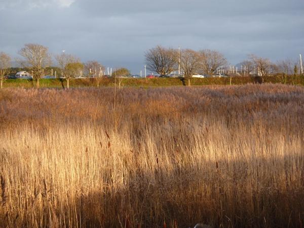 A sunny day in winter by netta1234