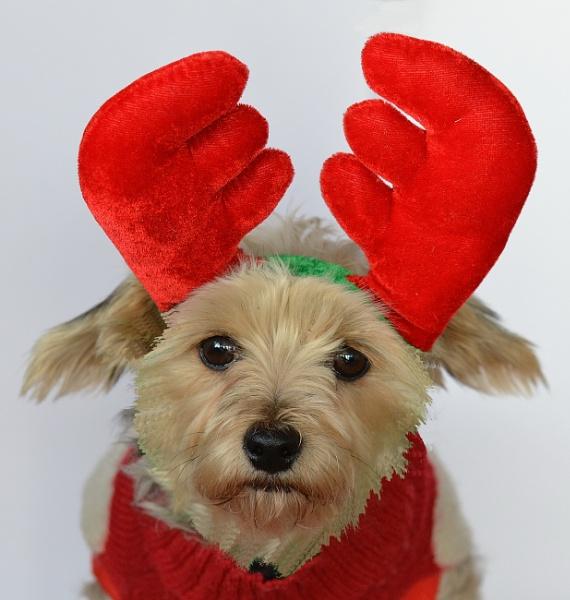 Yappy Christmas!! by Holmewood