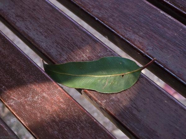 Summer leaf by MichaelMelb_AU