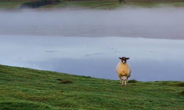 Alone with Ewe