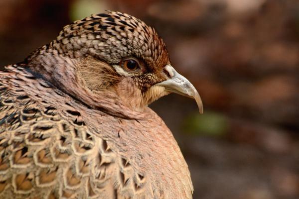 Does my beak look big in this. by AlexAppleby