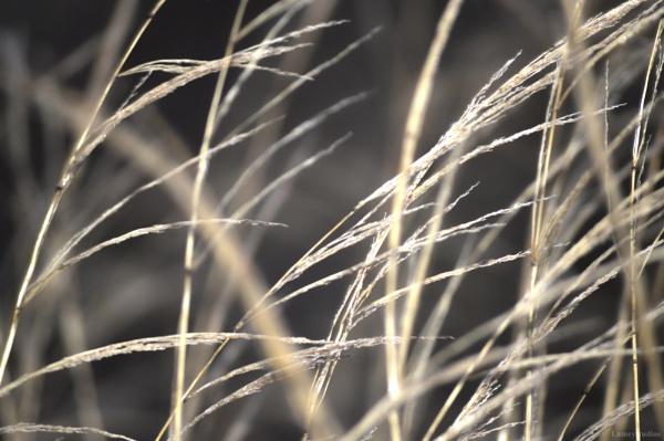 Yellow Grass by Foshowski