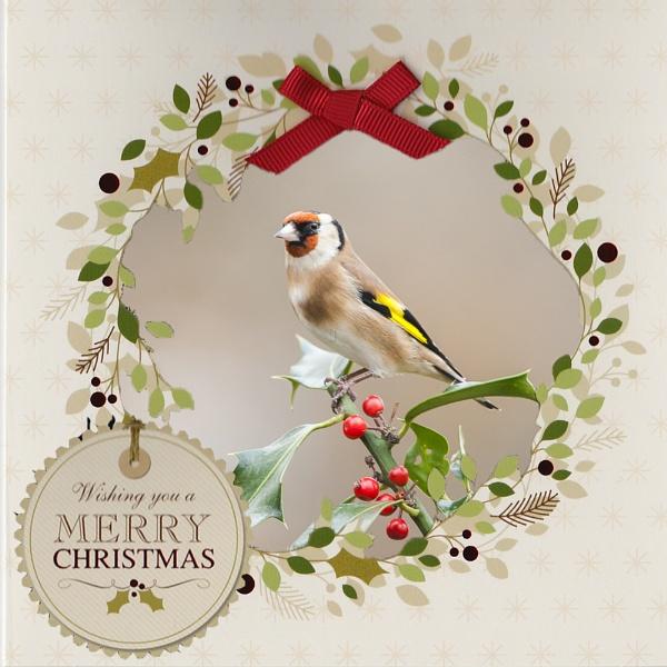 Merry Christmas by Trev_B