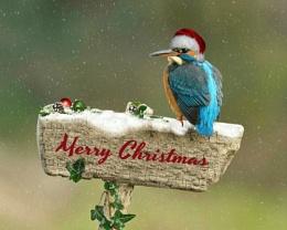 Merry Christmas EPZ 2013