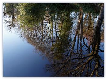 Mill pond reflection