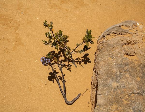 Desert Flower by Irishkate
