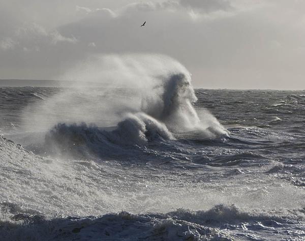 Sea horse by hibbz