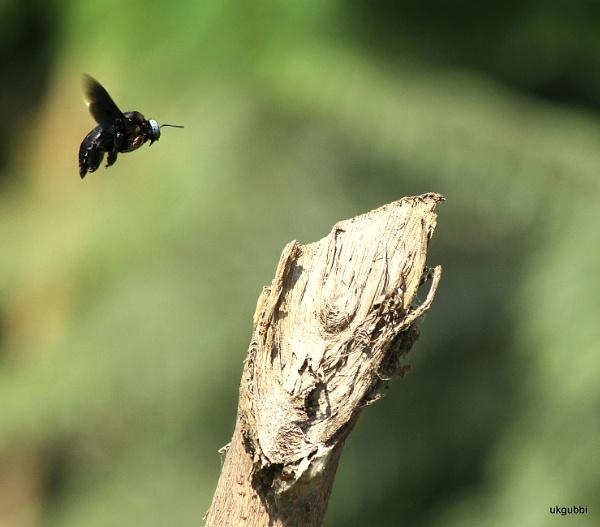 Bug by ukgubbi