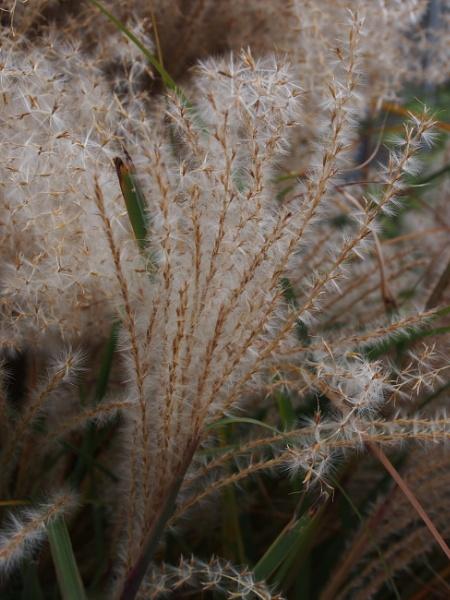 Colors of Fall--More Grasses by handlerstudio
