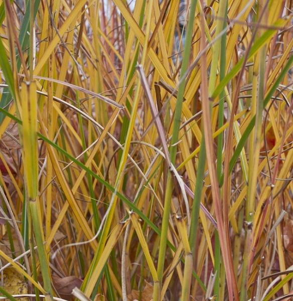 Fall Colors--Grasses by handlerstudio