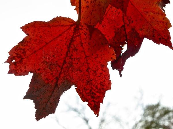 More Fall Colors by handlerstudio
