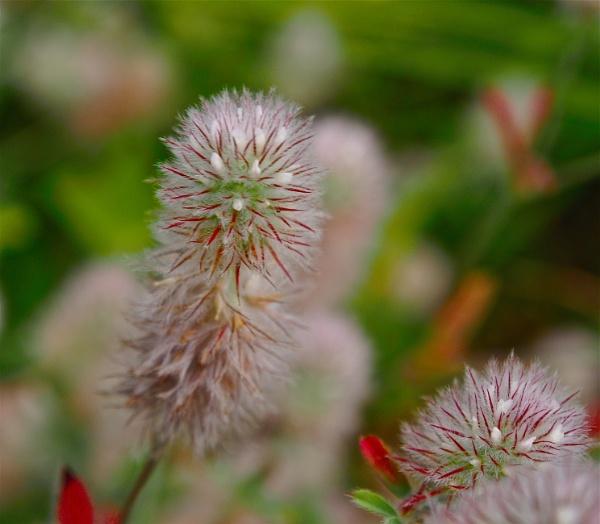 An Unusual Flower by handlerstudio