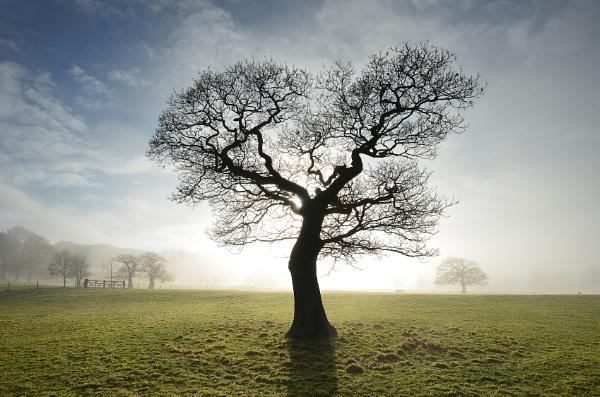 Tree Burst
