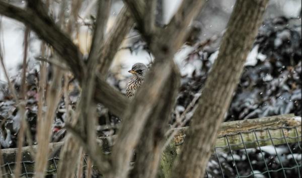 bird in habitat by macdaniel
